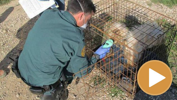 Criadero ilegal de perros en Zaragoza (player) (2) GUARDIA CIVIL