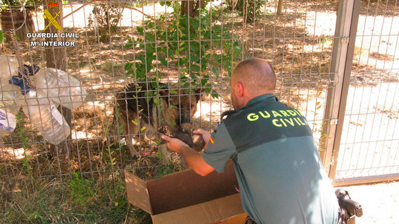 La Guardia Civil con uno de los cachorros recuperados. EUROPA PRESS