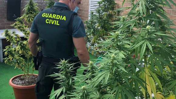 Un agente de la Guardia Civil requisa las plantas de marihuana de una terraza en Zizur Mayor. GUARDIA CIVIL