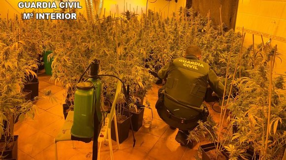 Plantación de marihuana encontrada por la Guardia Civil en Talavera. GUARDIA CIVIL