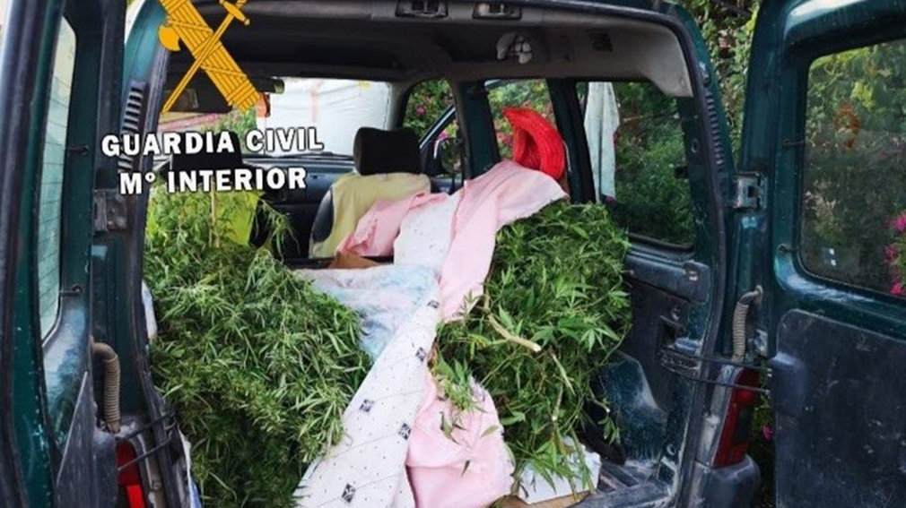 Incautadas 10 plantas de marihuana en varios controles de seguridad de la Guardia Civil. GUARDIA CIVIL